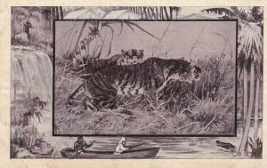 The Tiger - Africa Animal - Copyright 1909 M J Mintz of Chicago - DB