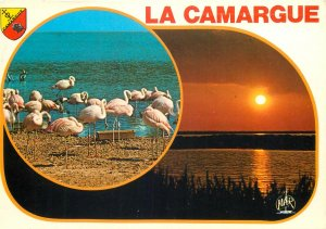 Animal Postcard La Camargue region Pink Flamingos