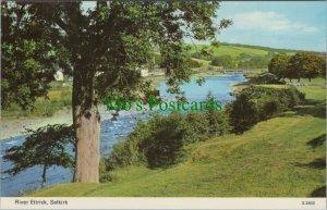 Scotland Postcard - River Ettrick, Selkirk   RS24925