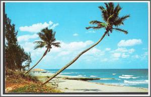 Florida Palms Ocean Beach - [FL-146]