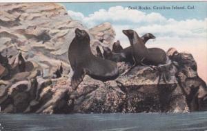 Sea Lions At Seal Rocks Catalina Island California Curteich