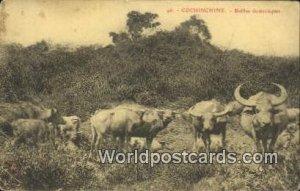 Buffles domestiques Cochinchine Vietnam, Viet Nam 1915 Missing Stamp