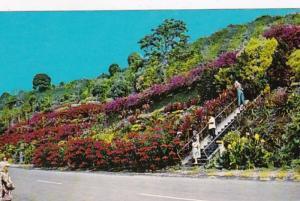 Hawaii Big Island Kealakekua Machado Gardens