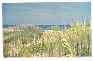 North Carolina Outer Banks Sea Oats 1972 Chrome