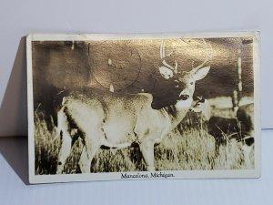 Vintage Postcard White Tail Buck Mancelona Michigan 1943 RPPC