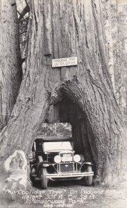 California Underwood Park On Redwood Highway The Coolidge Tree 1947 Real Photo