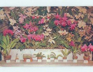 Pre-1980 MCKEE JUNGLE GARDENS SCENE Vero Beach Florida FL AF9040
