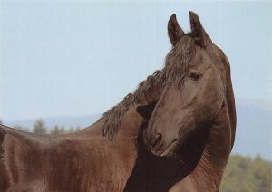 Horse Farma Sebeslavce Friszky Kon Chevau Pferde