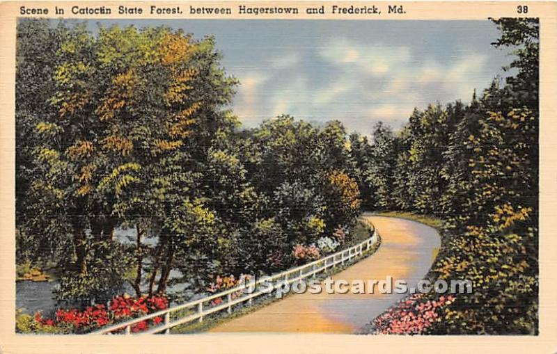 Catoctin State Forest Hagerstown MD Unused