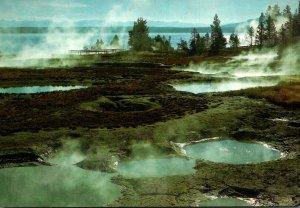 Yellowstone National Park Geyser Basin West Thumb