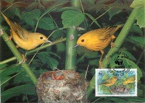 WWF Fauna maximum card Barbados Yellow Warbler family Postkarte