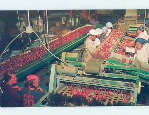 Unused Pre-1980 PACKING APPLES AT WAREHOUSE Perry & Fort Valley GA c6725-12