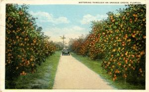 FL - Orange Grove