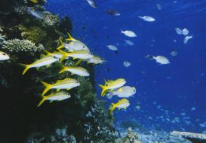Expo 75 Okinawa Japan Okinawa Island Fantasy Of Tropical Sea Fish Postcard D14