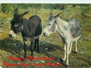 Donkeys Animaux Humoristiques Postcard