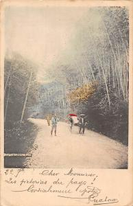 Japan Bamboo Road Going Mogi Vintage Postcard 1904