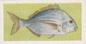 United Tobacco South Africa Vintage Trade Card African Fish 1937 No 23 Silver...