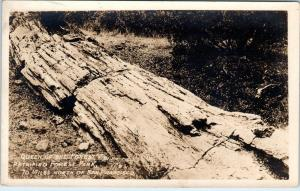 RPPC PETRIFIED FOREST, CA QUEEN of the FOREST at P F PARK    c1920s   Roadside