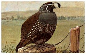 Bird , California Quail
