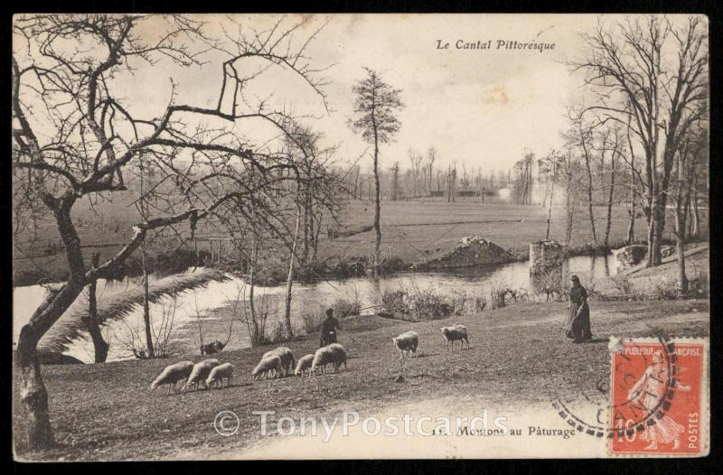 Le Cantal Pittoresque - Moutons au Paturage