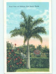W-border NATURE SCENE Palm Beach - West Florida FL AD7004