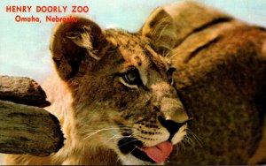 Nebraska Omaha Henry Doorly Zoo African Lion