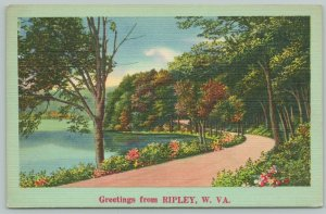 Ripley West Virginia~Scenic View Of Path And Lake~1940s Linen Postcard