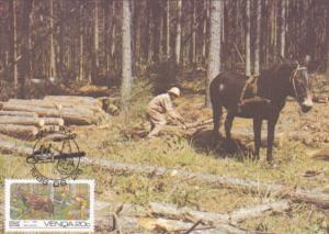 Forestry Felling and Extracting Saw Timber