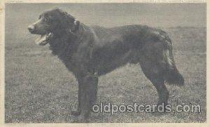 Dog Unused