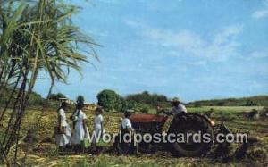 Fiji Fiji, Fijian Indian Cane Farmer Fiji Indian Cane Farmer
