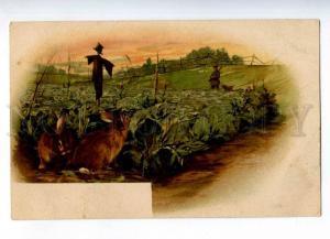 232097 HUNT dachshund HARES cabbage Vintage postcard