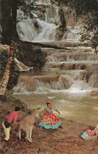 JAMAICA, 1974; Donkey being led to Dunns River Falls