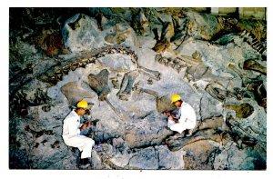 UT - Dinosaur National Monument. Fossil Bones