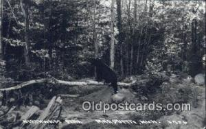Marquette, Michigan, USA Bear Postcard, Bear Post Card Old Vintage Antique  M...
