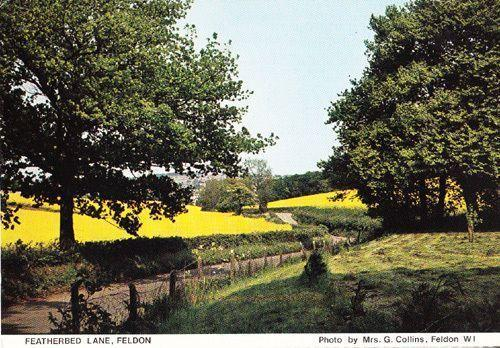 Featherbed Lane Feldon Green Rare Herts Hertfordshire Womens Institute Postcard