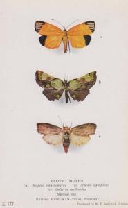 Mapeta Xanthomelas Macna Hampsoni Old Antique Moth Rare London Museum Postcard