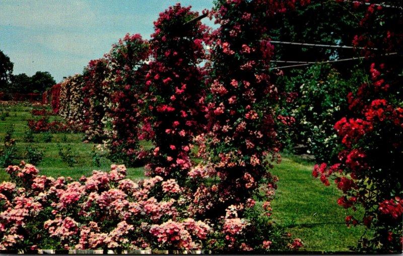 Rhode Island Providence Roger Williams Park Rose Garden