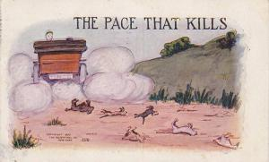 Young runs over small animals driving fast in automobile, The pace that kill...