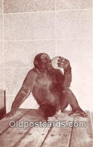 Woodland Park Zoo, Seattle, Washington, USA Gorilla Writing on back