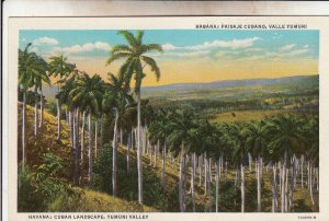 P1931 vintage postcard cuban landscape yumuri valley havana cuba trees unused