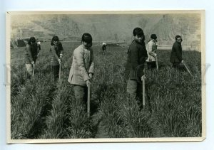 3155287 CHINA group of women in Mutual labor Linsyan weeding
