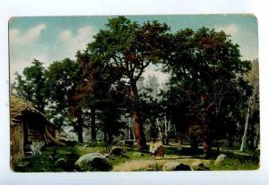 249427 DUCKER ESTONIA Oak forest vicinity of Revel EGSiS #123