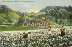 Old Postcard surroundings Montreux Field of daffodils