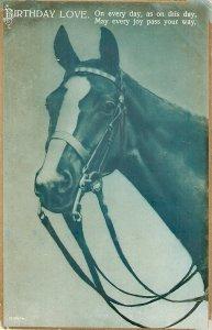 A Horse's Head Nice old vintage English Birthday Greetings  postcard