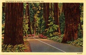 California Redwood Highway The Avenue Of Giants