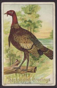 Thanksgiving Greetings,Turkey Postcard