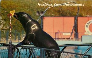 Marineland California~Sea Lion At Microphone~1960s