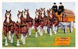 Advertising Post Card Wilson & Co Clydesdale Unused
