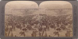 BR73689 cattle maket day lower pool of gihon hinnom jerusalem  israel  18x9cm
