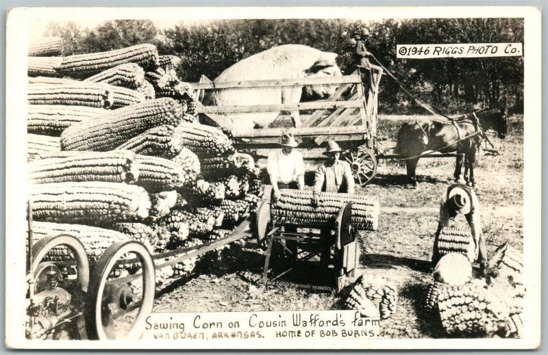 VAN BUREN AR CORN on FARM EXAGGERATED VINTAGE REAL PHOTO POSTCARD RPPC
